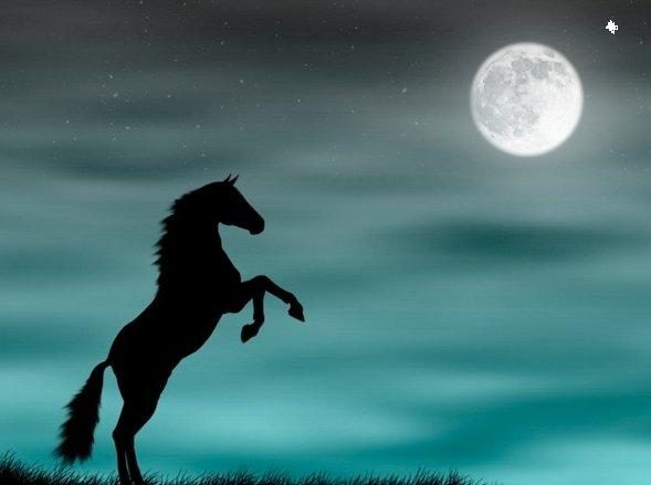 wild-horse-silhouette-in-a-blue-moonlight