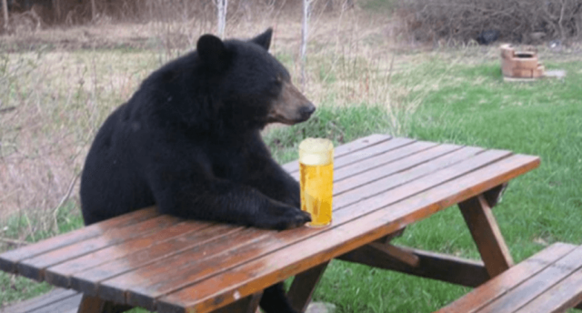 bear-with-beer