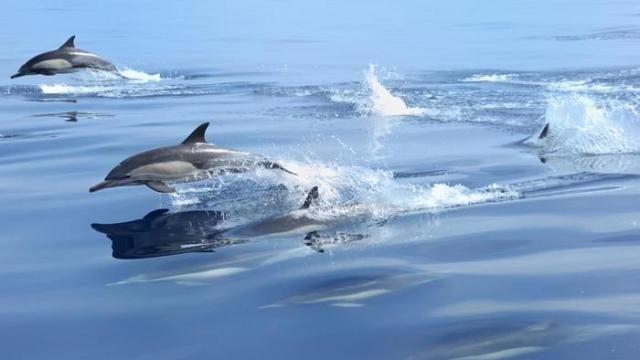 how-fast-do-dolphins-swim_896c44096542cc7a